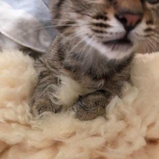 前脚片方に障害がありますがとてもかわいい子猫です
