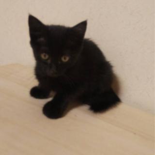 黒の子猫ちゃん(トライアル中)