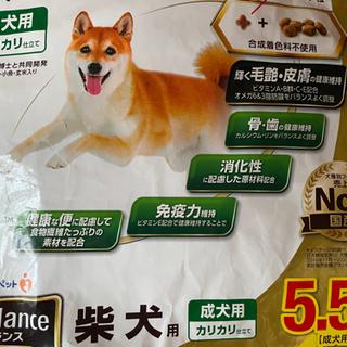ベストバランス柴犬用 5.5キロ - 新潟市