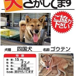 情報希望/寄居町風布で四国犬が迷子