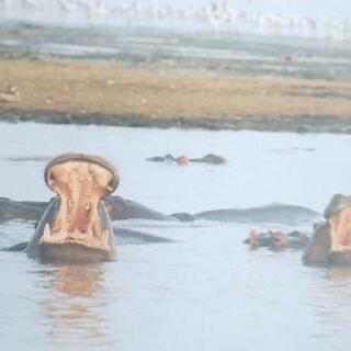 写真集 アフリカンベイビー(動物の子供たち) - 本/CD/DVD