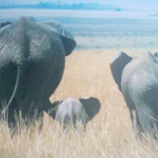 写真集 アフリカンベイビー(動物の子供たち) - 売ります・あげます