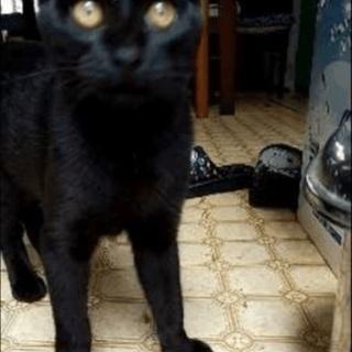 可愛い黒猫ちゃんです