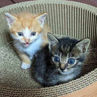 おかげ様で引き受けいただきました。2ヶ月の猫2匹を助けてください。