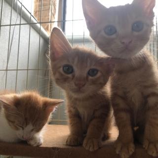 2ヶ月未満の子猫3匹とまだキトンの三毛猫