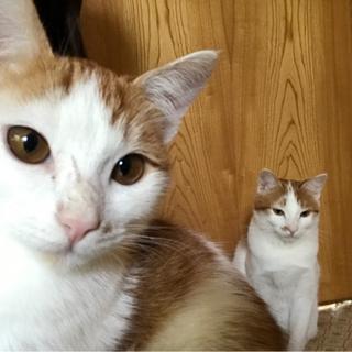 仲良し姉妹猫さん