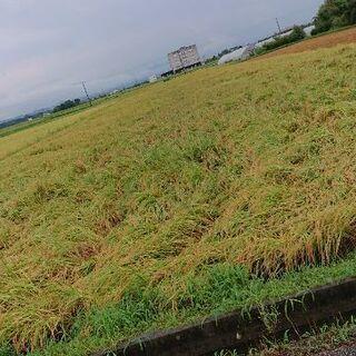 2021年産 近江米 コシヒカリ玄米30kg