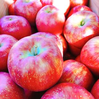 りんご作業 お気軽にご連絡ください