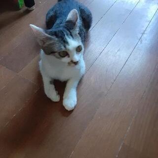 5カ月ぐらいの女の子です。野良猫に餌を食べさせていたら仔猫が3匹...