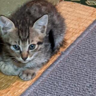 生後1ヶ月くらいの可愛い猫ちゃんたちです❤️ 写真追加しました✨