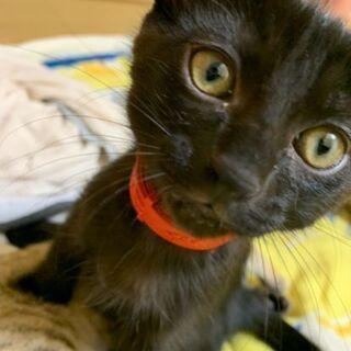 元気いっぱい6月生まれの仔猫です。