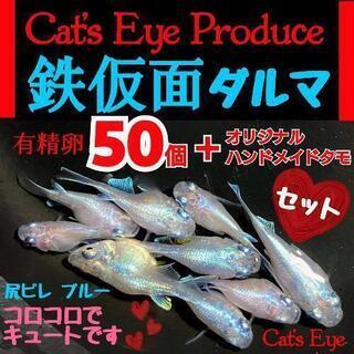 【Cat's Eye Produce】 キュート💕 鉄仮面ダルマ...