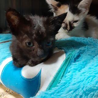 生後2か月過ぎの子猫たちどの子も良い子です