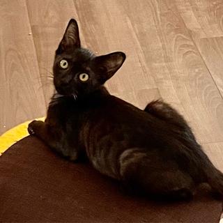 甘えん坊黒猫
