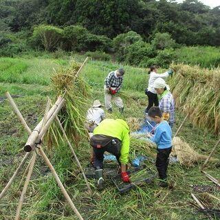 稲刈り~自然農の米作り~ - 館山市
