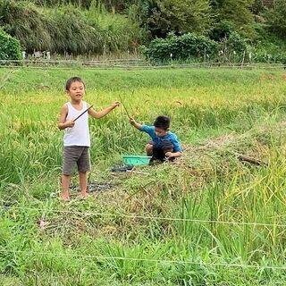 稲刈り~自然農の米作り~ − 千葉県