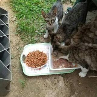 ご近所さんのお庭で飼う外猫が子猫を産みました