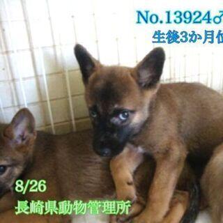 生後3ヶ月位の可愛い雑種の仔犬、男の子と女の子の兄妹です。