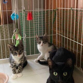 可愛い猫達の里親さん募集中