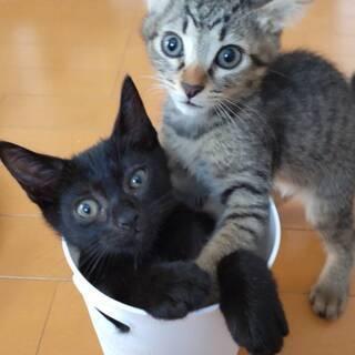 キジの可愛い3兄弟黒猫カシュちゃん