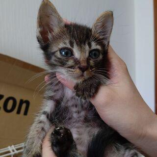 生後1ヶ月くらいキジトラ猫ちゃん