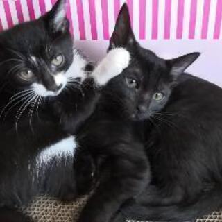 七夕生まれの姉妹猫(2ヶ月)
