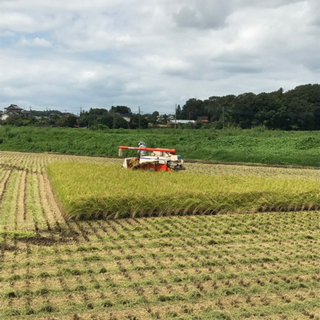 R3年 新米コシヒカリ玄米30キロです。