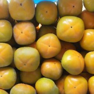 🌟🌟和歌山県橋本市の甘い柿7.5キロ(進物用)送料無料🌟🌟