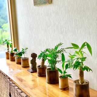 おしゃれで温かみのある竹でできたポット作り体験 (真竹ハン…
