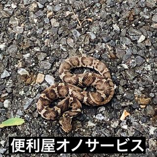 動物の死骸 撤去、消毒致します‼️名古屋市、春日井市、尾張旭市 - 名古屋市