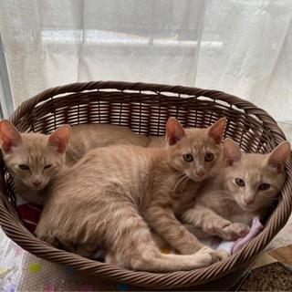 3兄弟 子猫