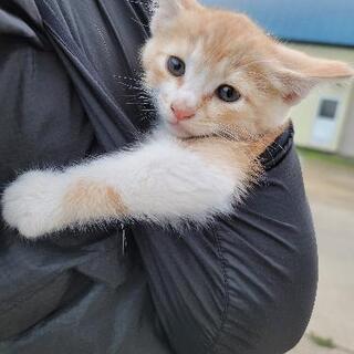 子猫2、6ヵ月 成猫の里親募集
