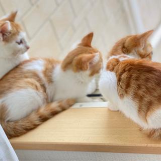 生後2ヶ月半。ちょっとビビリの兄弟猫です