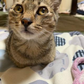 生後2ヶ月の猫の里親募集です☆【受付停止中】