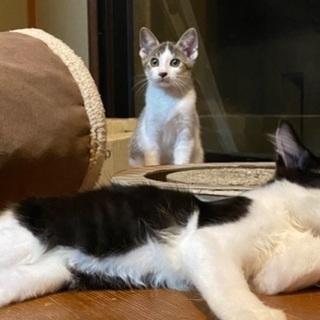 保護猫 三毛猫、トラ毛、白黒ハチ