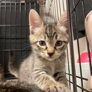 一旦募集終了します💦4匹の子猫の里親募集🐱💦