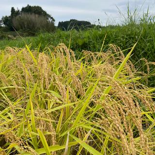 奈良 大和高原産 新米コシヒカリ 玄米30㎏