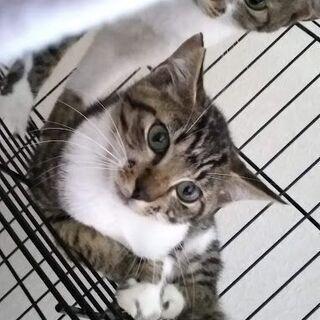 キジトラーズ 3ヶ月子猫と1歳弱若猫さん
