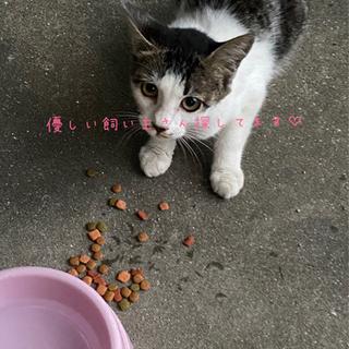 生後3ヶ月くらいの猫ちゃんですฅ(=^・ﻌ・^=)ฅ