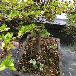 観葉植物 盆栽 5鉢くらい。