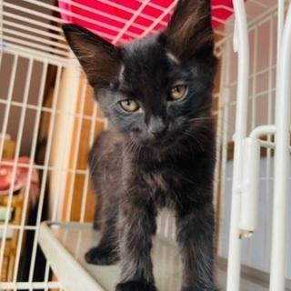 更新しました❗️【子猫】生後約1ヶ月の黒猫残り3匹‼️