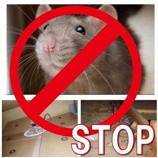 ネズミ駆除・防除
