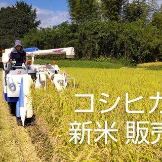 ⭐コシヒカリ 玄米30kg⭐       玄米10kg売り可能(...