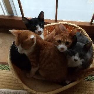 もうすぐ生後5ヶ月の子猫達