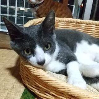 もうすぐ生後5ヶ月の子猫達 − 山口県