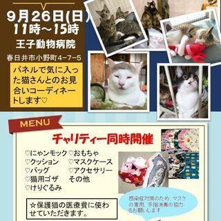 保護猫バザー&パネル展の画像