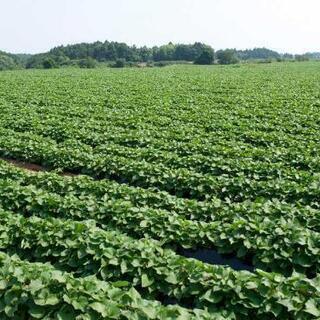 追記有!未経験歓迎!900円~1100円農家さんのお手伝い&野菜の栽培