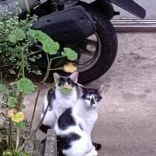 保護猫 地域猫 TNR 川崎市 調布市