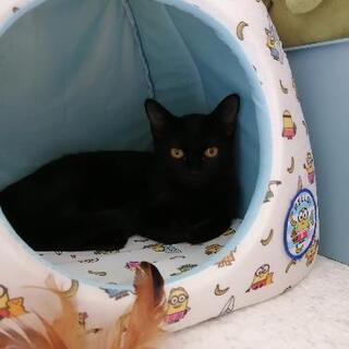 保護猫里親募集