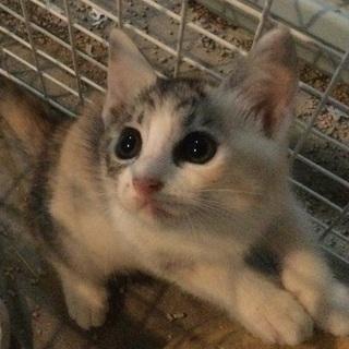 【トライアル中】保護猫ハナちゃんが出産しました③